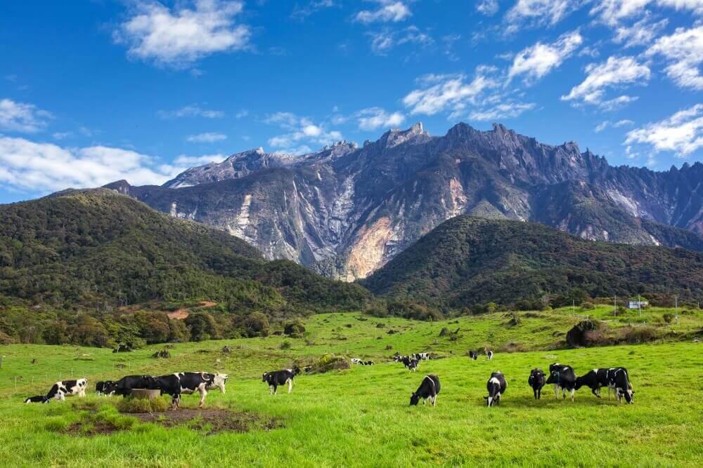 Inilah 25 Tempat Menarik Untuk Anda Kunjungi Di Kundasang Dan Ranau Sabah