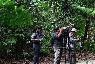 Sambutan Borneo Bird Festival