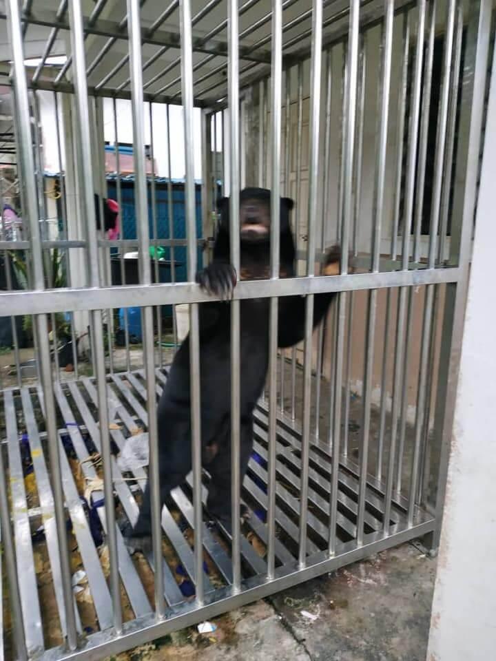 Sun Bear Dikurung Selama 7 Tahun Berjaya Diselamatkan