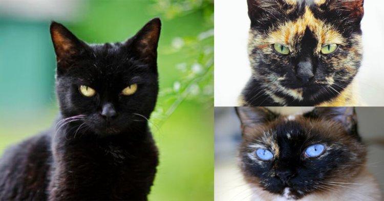 Berikut Adalah Istilah Sebenar Warna Kucing Peliharaan Kita