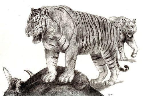 Adakah Harimau Borneo Benar-Benar Wujud Pada Suatu Ketika Dahulu?