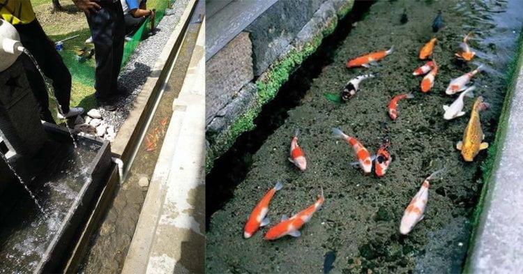 Punya Bersihnya Longkang SMK Agama Miri, Inisiatif Longkang Bersih Diilhamkan Oleh Longkang Ikan Koi Di Jepun