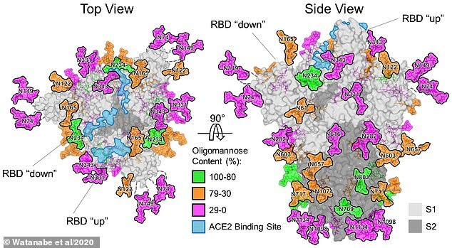 Saintis Akhirnya Dedah Penyamaran Licik Struktur COVID-19 Dalam Tubuh Manusia