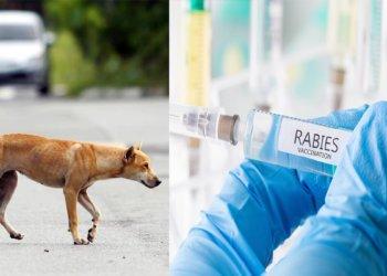 Rabies Kembali Lagi, Anjing Yang Gigit Budak Lelaki Disahkan Positif