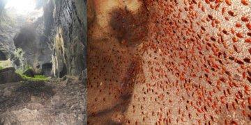 Gua Gomantong Di Sabah, Tempat Populasi Lipas Terbanyak Di Dunia