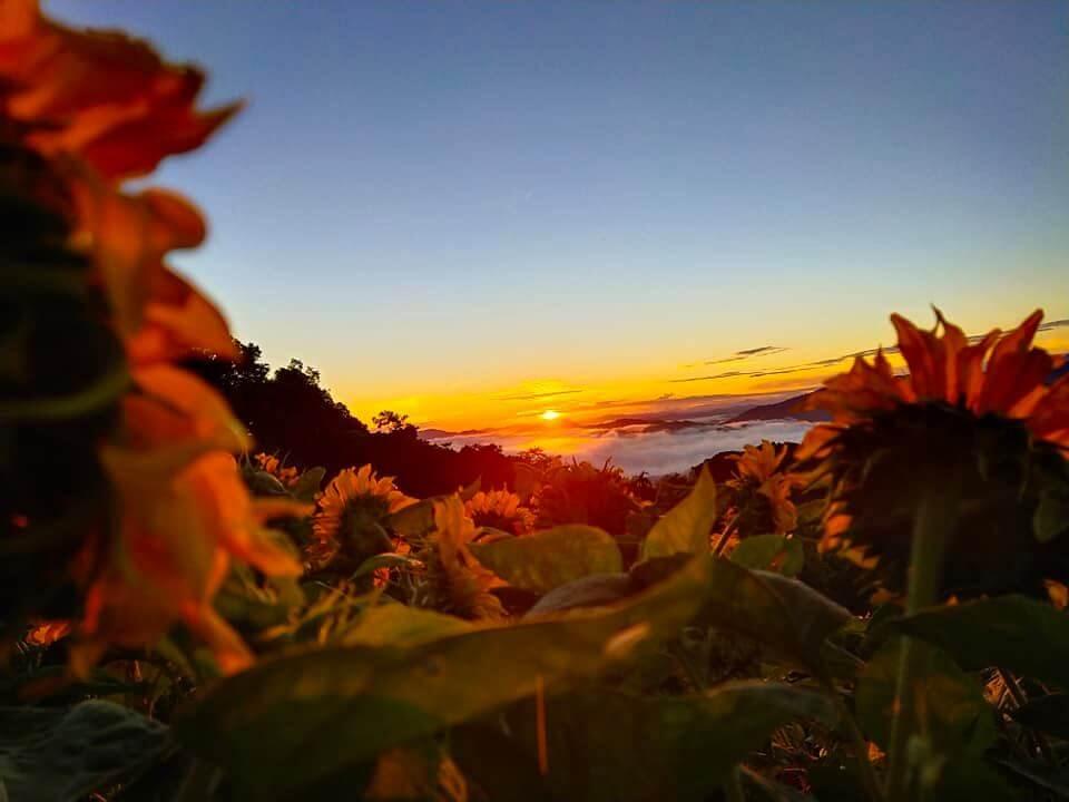 Lihat Pemandangan 2-In-1 Sunrise Dan Bunga Matahari Atas Bukit Kimondou, Sabah