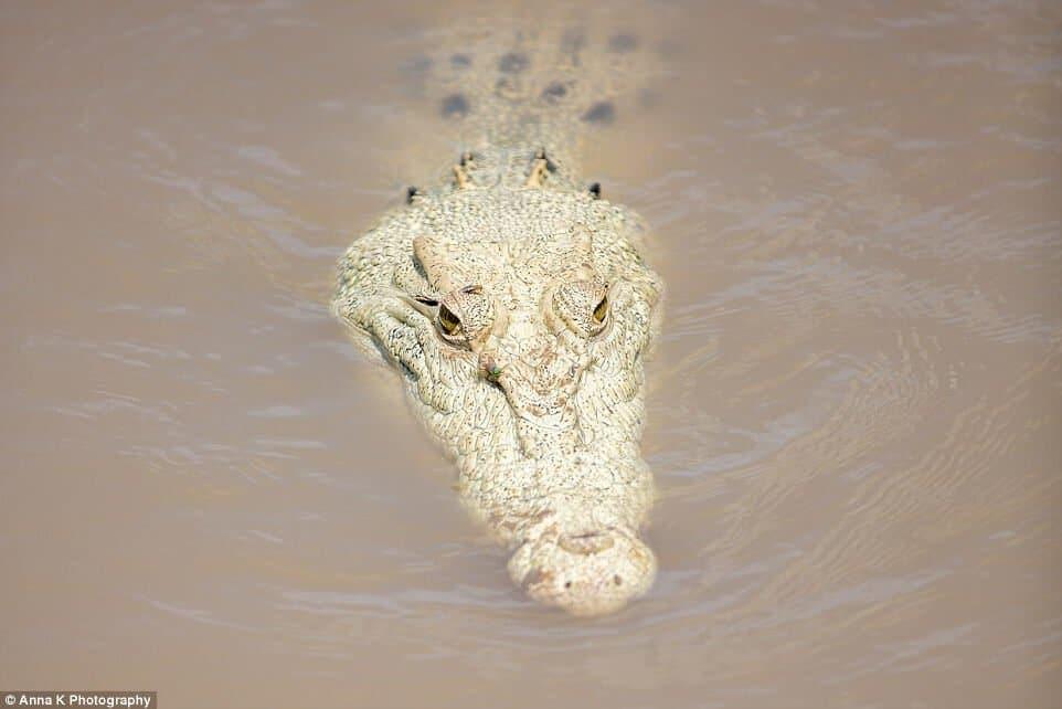 Lagenda Terrunggari, Buaya Putih Penjaga Sungai Kinabatangan