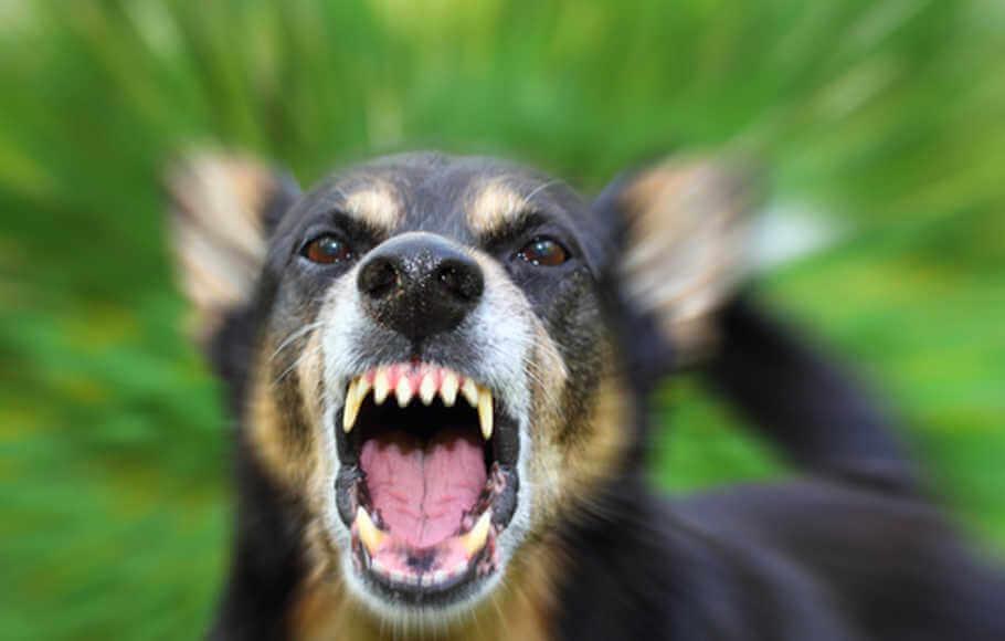 Kanak-Kanak Berusia Tiga Tahun Parah Di Kepala Diserang Anjing Jiran