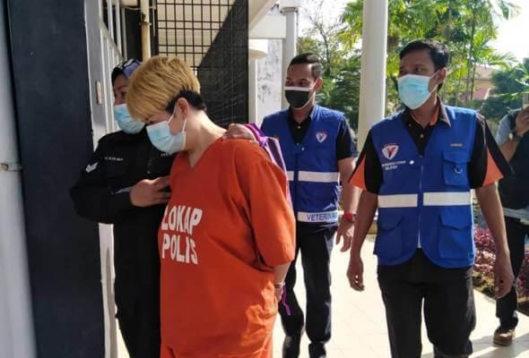 Wanita Tular Bunuh Kucing Bunting Menggunakan Batang Besi Kini Direman 4 Hari