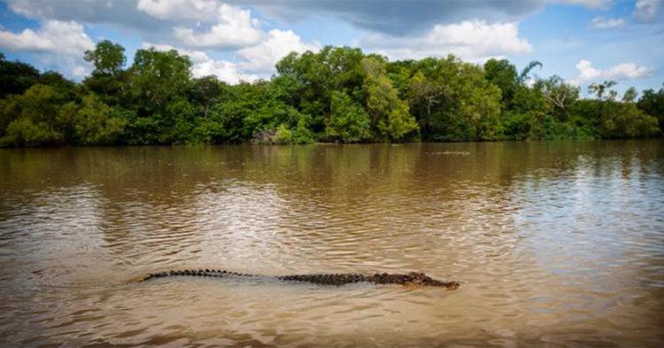 Dibaham Buaya Semasa Mandi Sungai, Kanak-Kanak Lelaki Maut