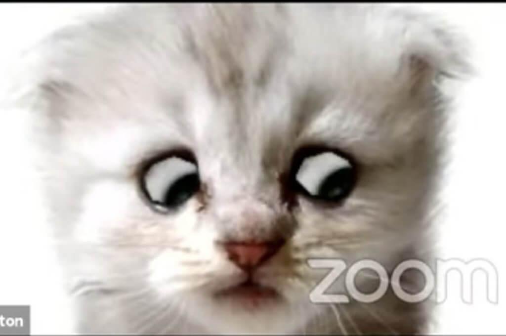 Viral Video Seorang Peguam Berkata 'Saya Bukan Kucing' Setelah Tersilap Guna Filter Anak Kucing Di Zoom