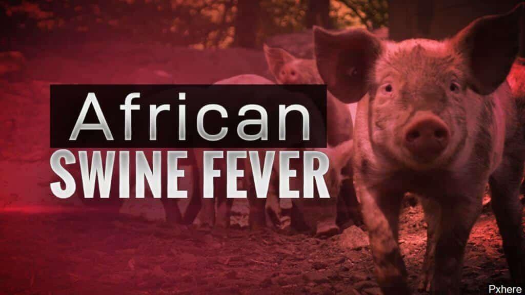 Daerah Pitas, Sabah Telah Diisytiharkan Sebagai Kawasan Wabak Demam Babi Afrika