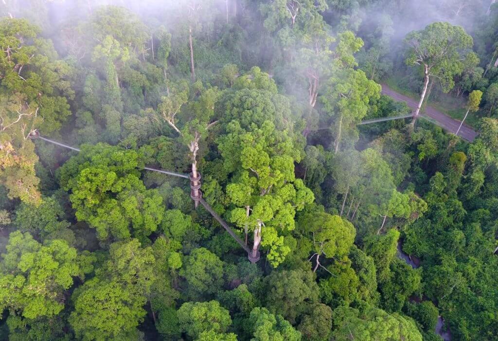 9 Fakta Menarik Tentang Pulau Borneo Yang Ramai Tidak Tahu