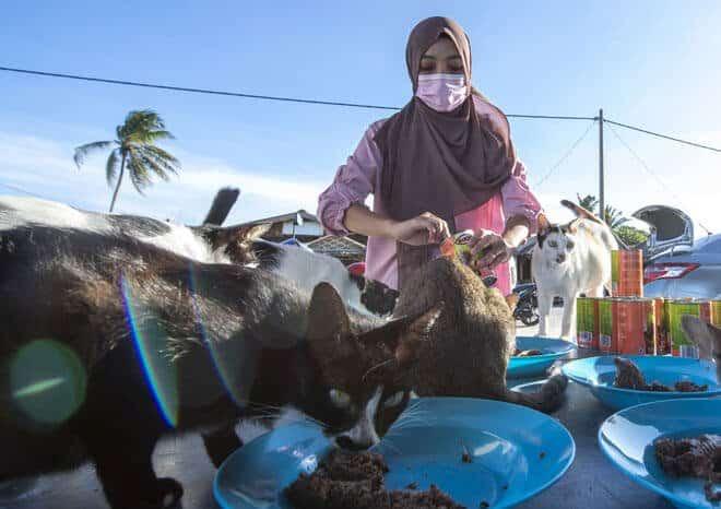 Graduan Universiti Malaysia Sabah Dedikasi 2 Jam Sehari Bagi Makan Kucing Jalanan