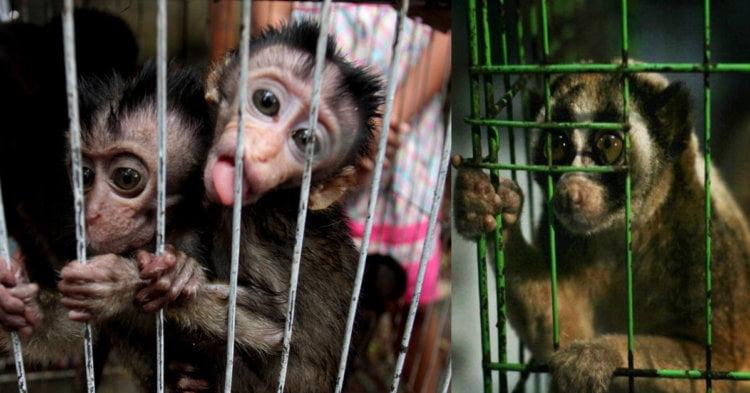 Ini Cara Untuk Menyelamatkan Haiwan Dilindungi Yang Sedang Dijual, Dan Membelinya Bukan Caranya