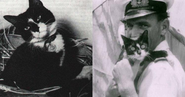 Terselamat Dari 3 Kejadian Kapal Tenggelam, Ini Adalah Kisah Kucing Yang Digelar 'Unsinkable Sam'