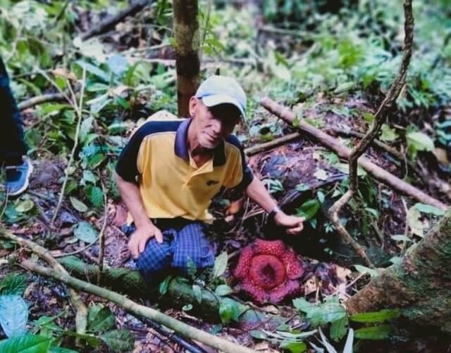 Hajat Ke Hutan Ingin Mencari Rotan, Secara Tak Sengaja Seorang Petani Di Belaga Menemui Bunga Rafflesia