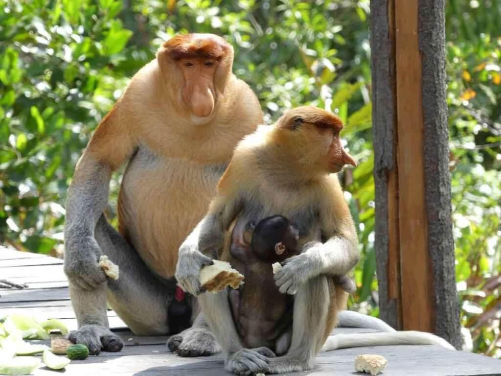 Sekumpulan Penyelidik Temui 2 Spesis Kupang Baharu Berstatus Endemik Di Limbang Dan Kinabatangan