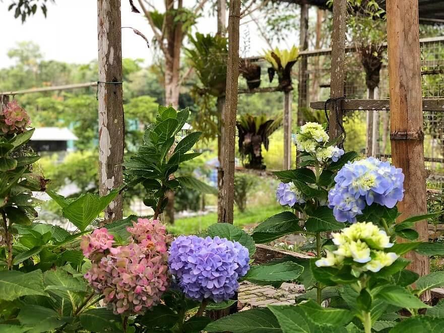 'Rumah' Gergasi Pelbagai Haiwan Dan Tumbuhan, KLB Garden Tebedu Wajib Masuk Dalam Wishlist Anda